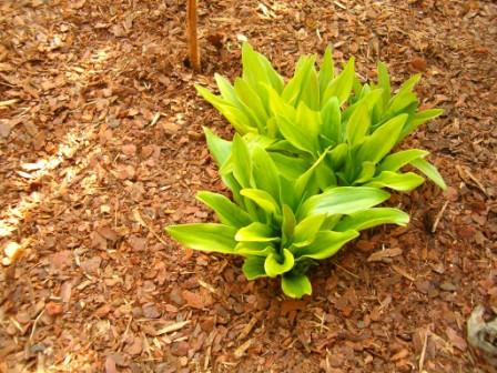 A Kátai Fenyőkéreg elérhető árakon forgalmaz minőségi talajtakarókat.