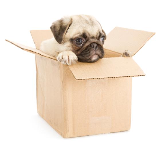 A Kecskeméti Költöztetés profi költöztetési szolgáltatásokat nyújt az Ön igényei alapján.